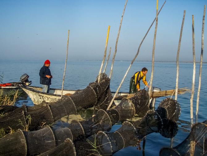 Pêcheurs d'anguiles