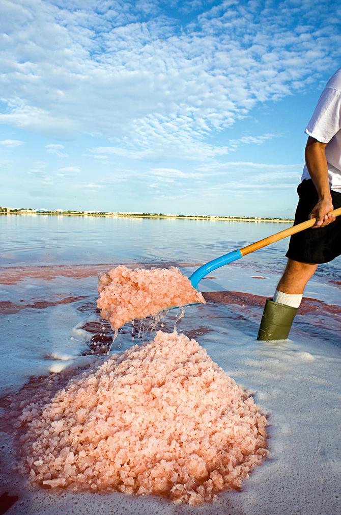 Récolte du sel dans les salins d'Aigues-Mortes